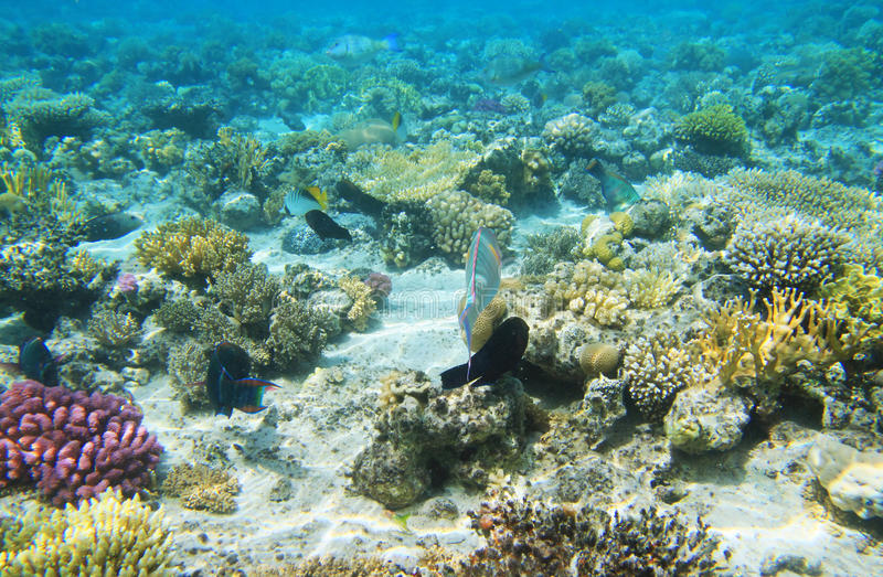 Corel reef view stock photo