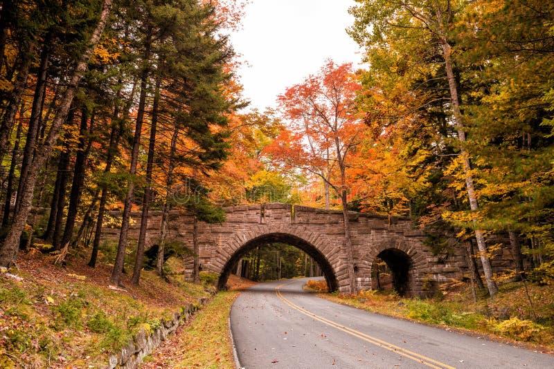 Cores bonitas da queda do parque nacional do Acadia em Maine imagem de stock