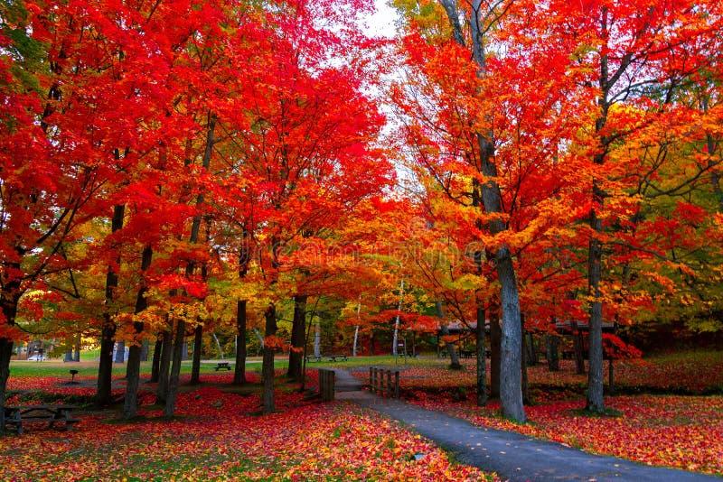 Cores bonitas do outono da folhagem de outono nos EUA do nordeste imagens de stock