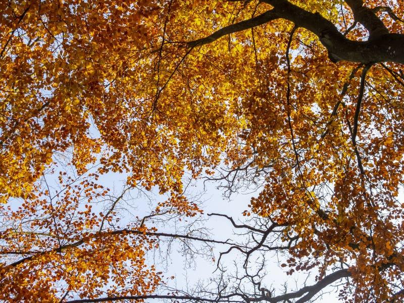 Cores bonitas do outono do Sept Heures de Parc de, em termas, Bélgica imagens de stock