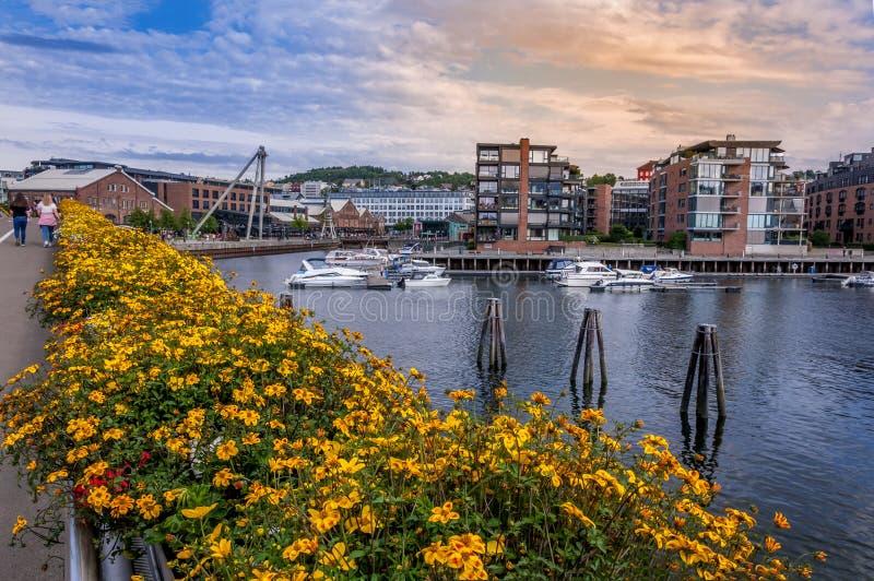 Cores bonitas do verão em Trondheim noruega fotos de stock