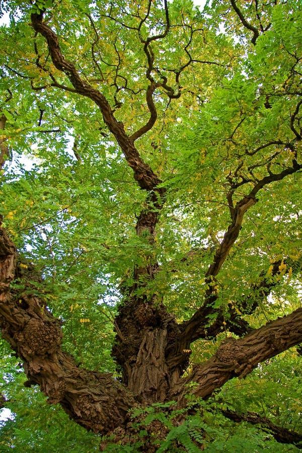 Cores da árvore imagem de stock