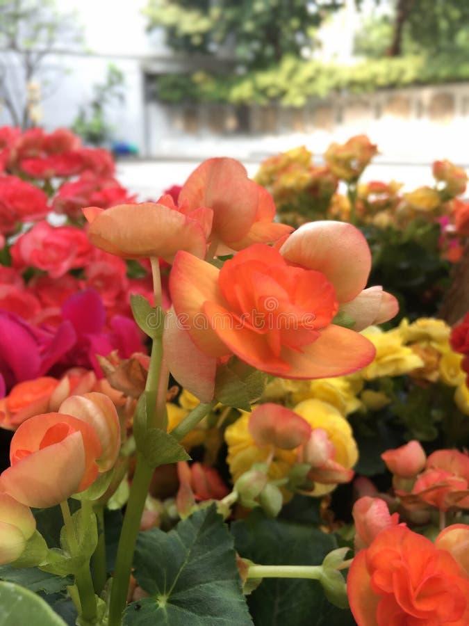 Cores da flor fotografia de stock royalty free
