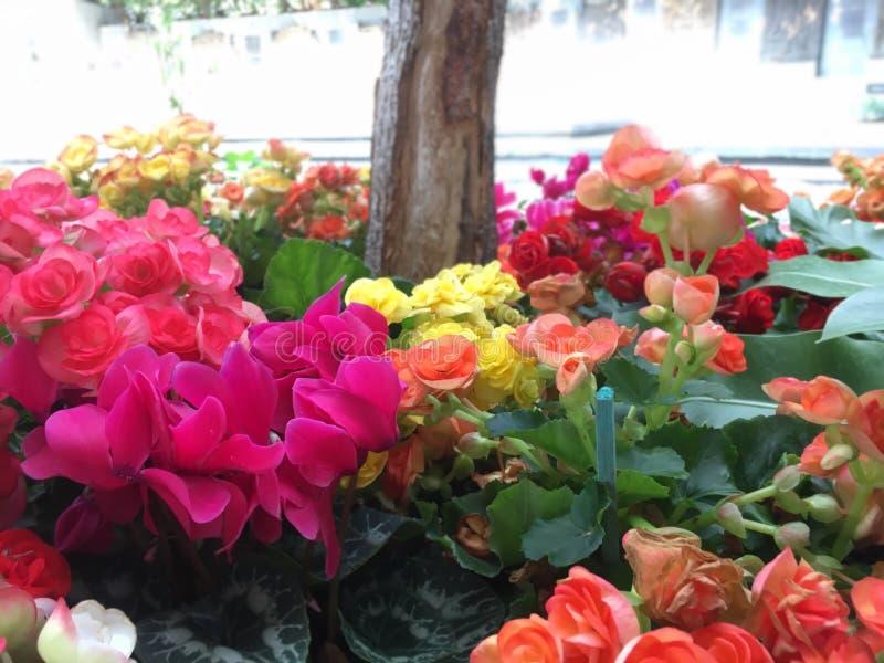 Cores da flor imagens de stock royalty free