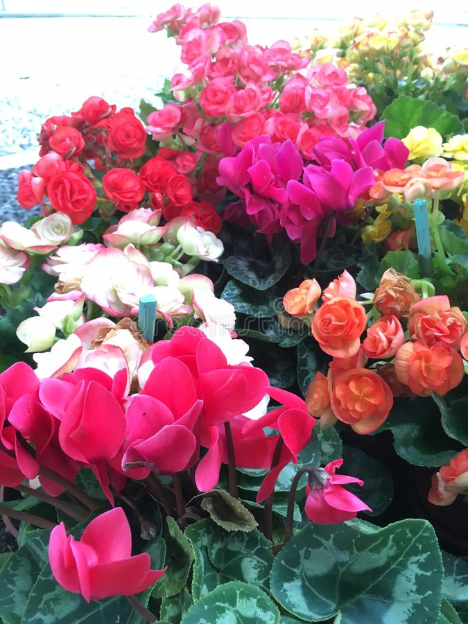 Cores da flor imagem de stock royalty free