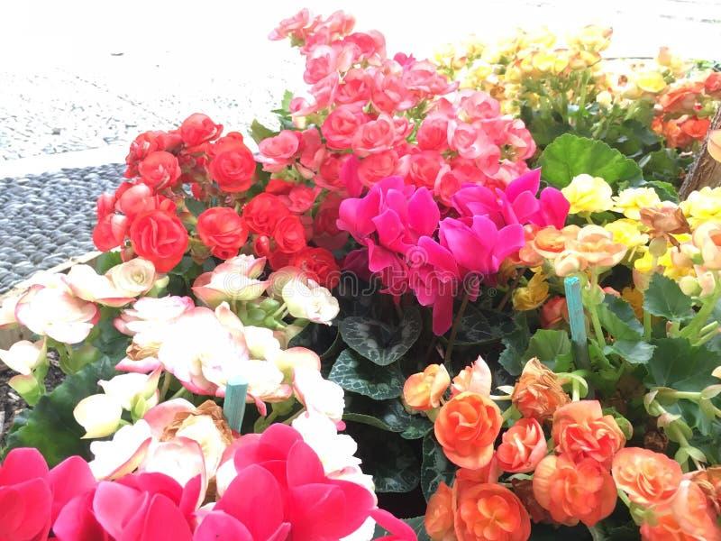 Cores da flor fotografia de stock