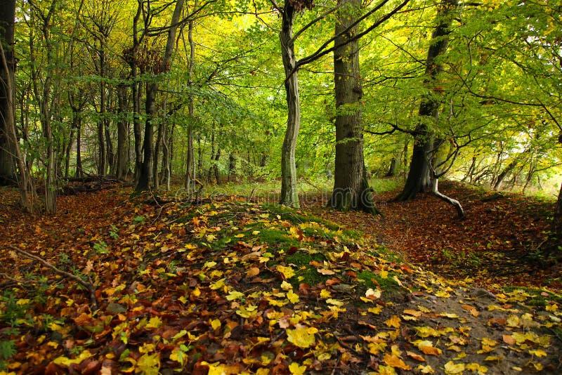 Download Cores Da Floresta Em Outubro Imagem de Stock - Imagem de assoalho, cores: 80101999