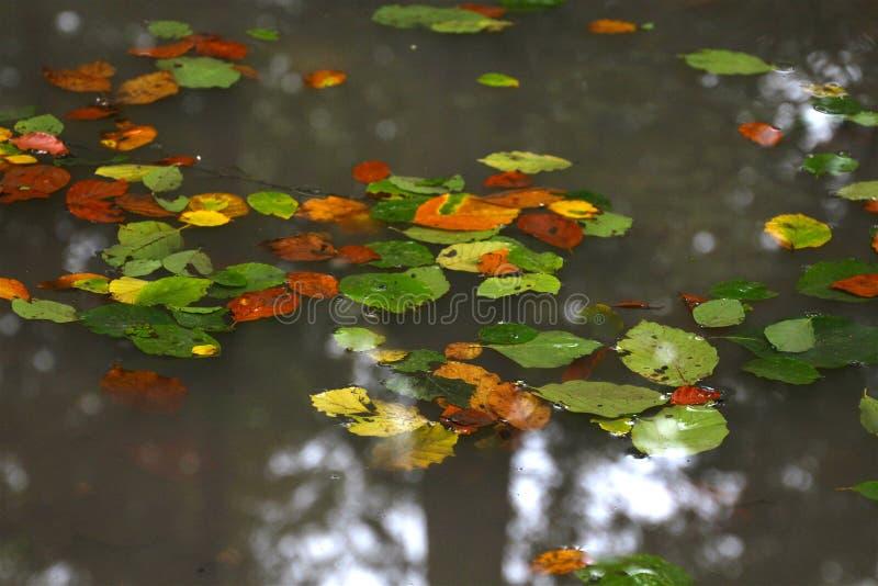 Download Cores Da Floresta Em Uma Poça Foto de Stock - Imagem de dourado, amarelo: 80101898