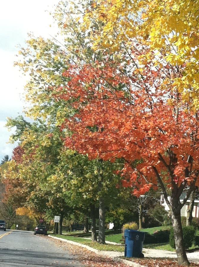 Cores da folha do outono imagens de stock royalty free