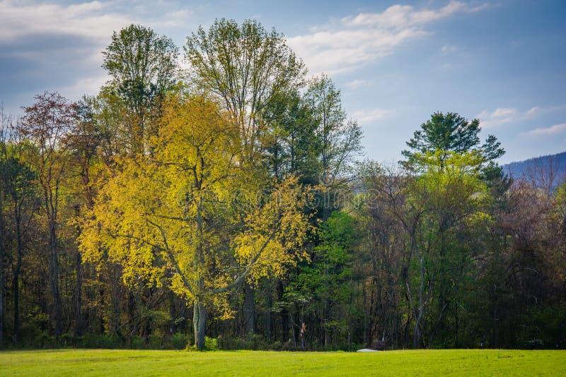 Cores da mola em árvores no Shenandoah Valley rural de Virgini foto de stock royalty free