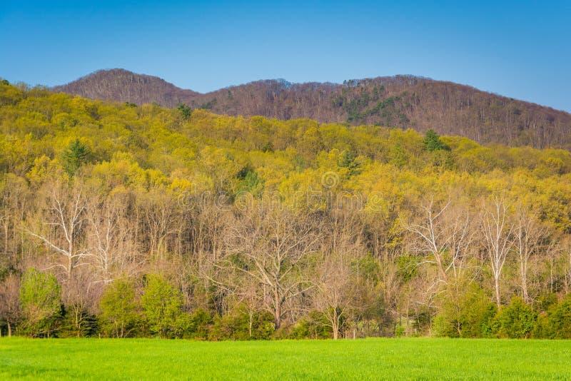 Cores da mola em árvores no Shenandoah Valley rural de Virgini fotos de stock