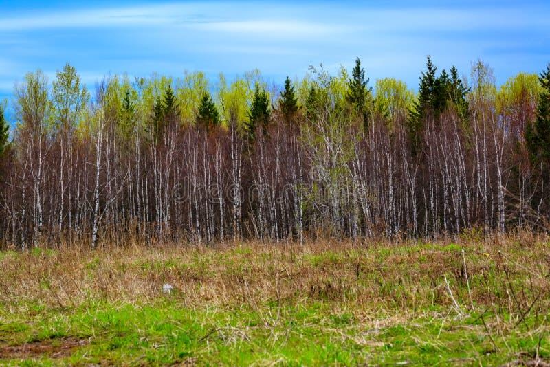 Cores da mola em maior Moncton, Novo Brunswick, Canad? imagem de stock royalty free