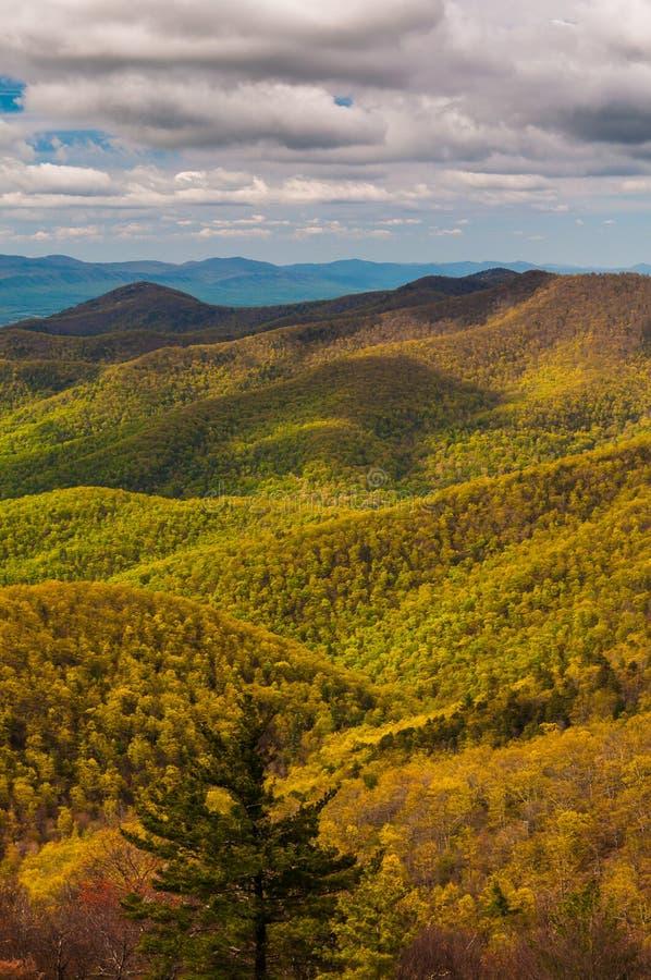 Cores da mola nas montanhas apalaches no parque nacional de Shenandoah, Virgínia. imagem de stock