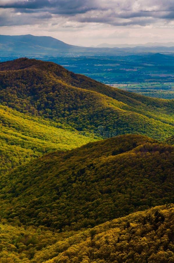 Cores da mola nos Appalachians, no parque nacional de Shenandoah, Virgínia. imagem de stock royalty free