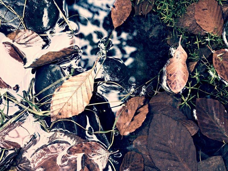 Cores da queda Cascalho no rio da montanha coberto com as folhas outonais imagem de stock