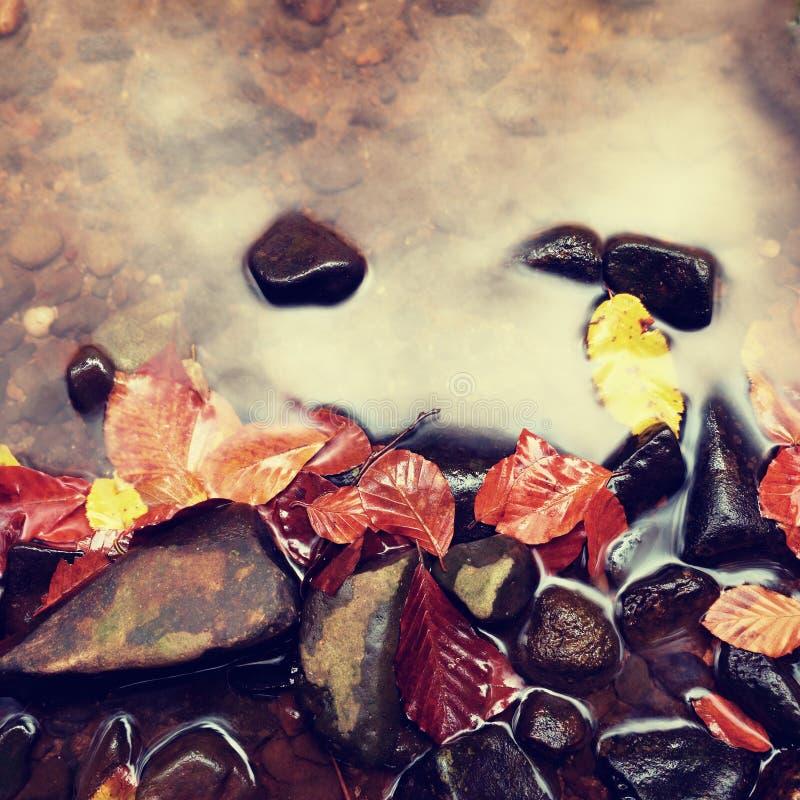Cores da queda Cascalho no rio da montanha coberto com as folhas outonais fotos de stock royalty free