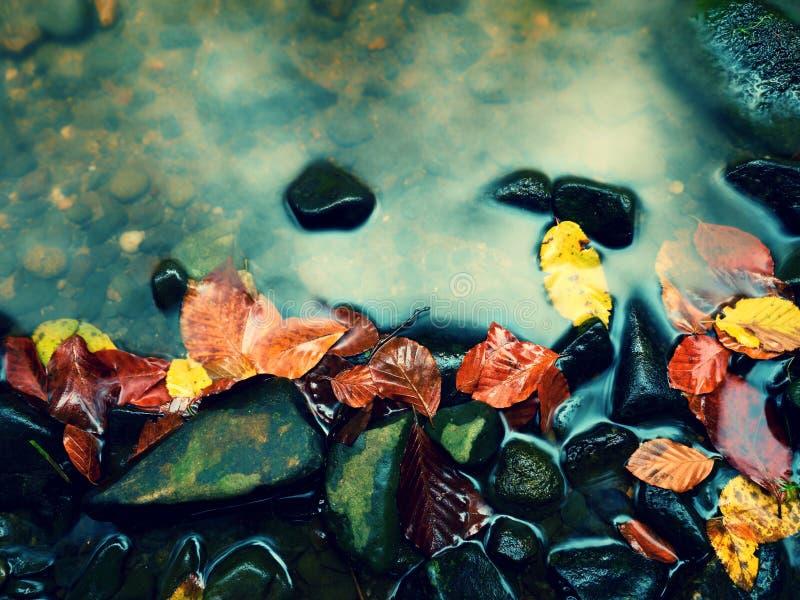 Cores da queda Cascalho no rio da montanha coberto com as folhas outonais fotos de stock