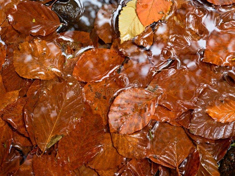 Cores da queda Cascalho no rio da montanha coberto com as folhas outonais foto de stock royalty free