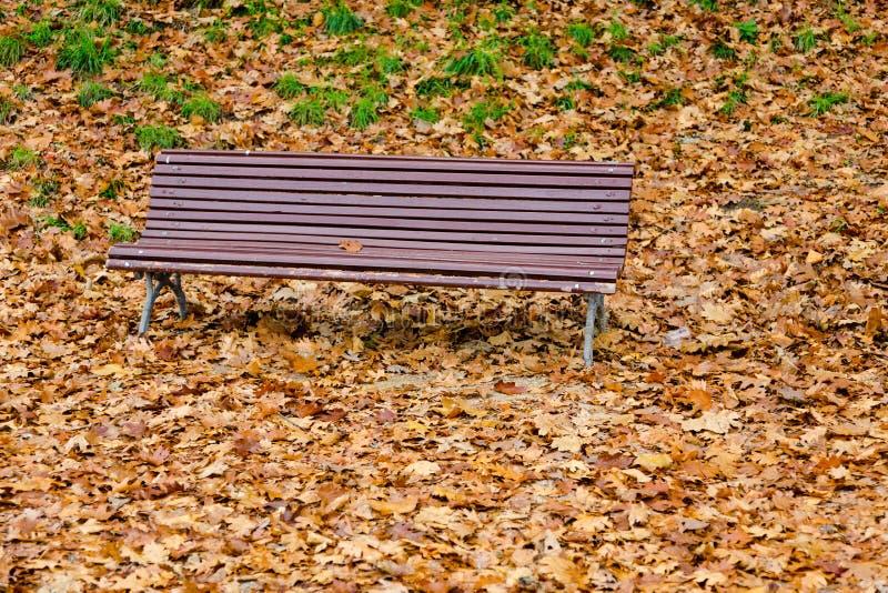 Cores da queda do outono no parque imagem de stock