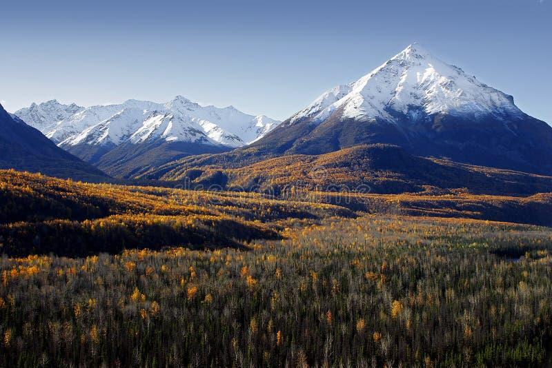 Cores da queda em Alaska fotos de stock