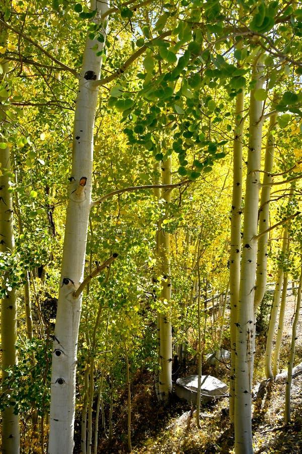 Cores da queda em Colorado foto de stock royalty free