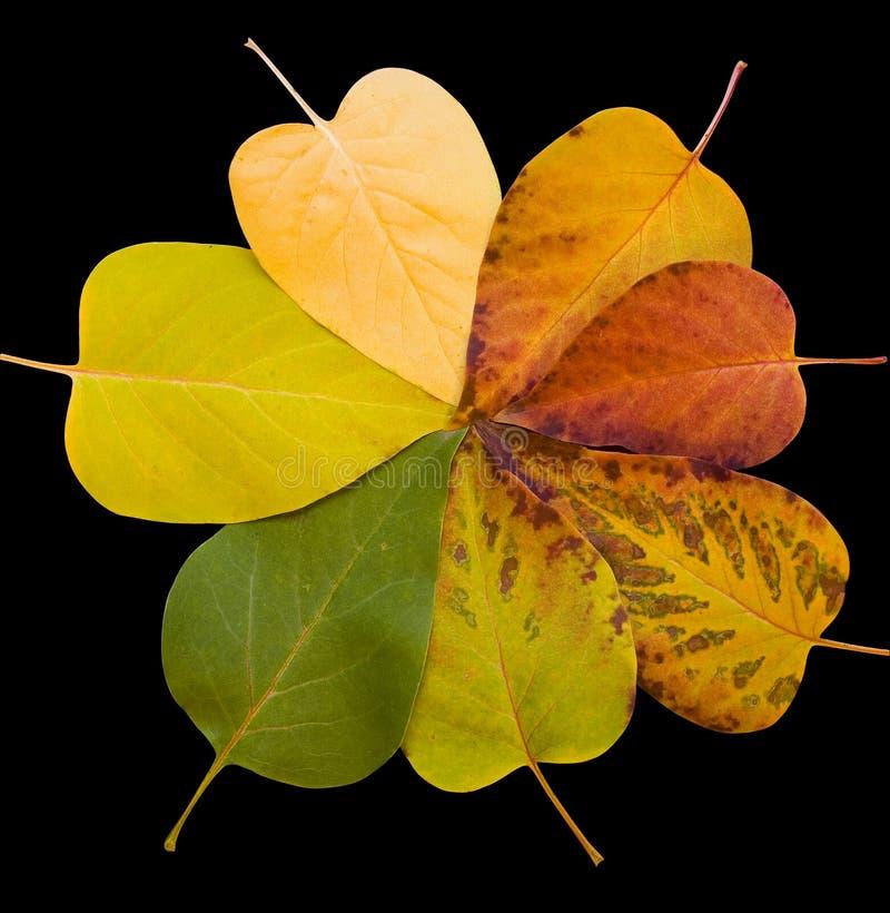 Cores da queda - folhas fotografia de stock
