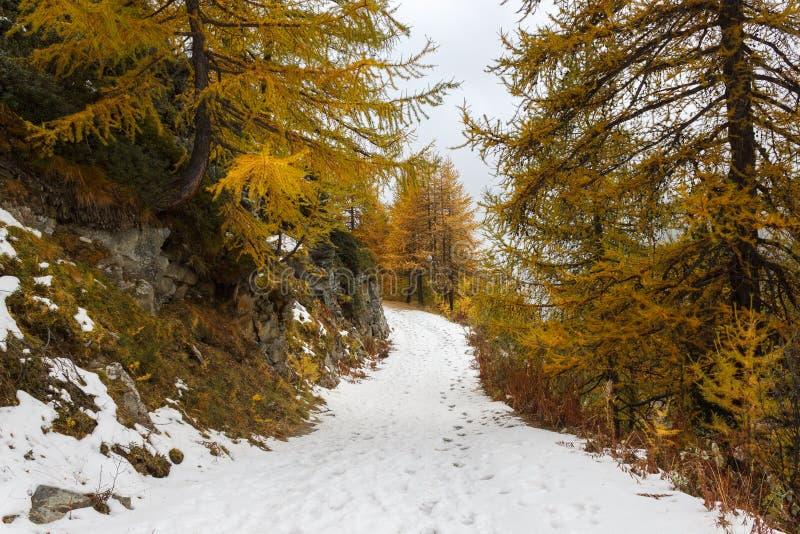 Cores da queda na montanha alta em um dia nebuloso e nevoento Vale de Ayas, Aosta Itália foto de stock royalty free