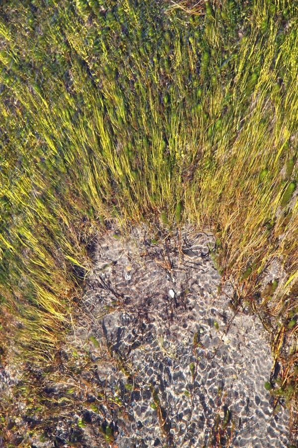 Cores de Aqua Marine no geyser imagens de stock