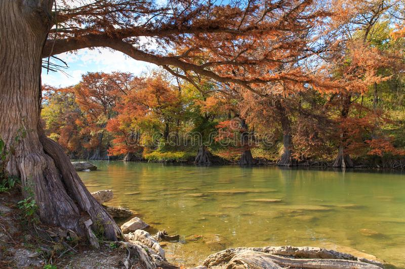 Cores de Guadalupe River State Park Fall imagens de stock royalty free