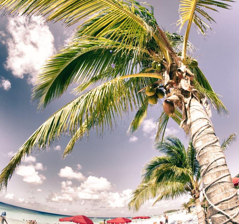 Cores de Turk Beach grande imagem de stock