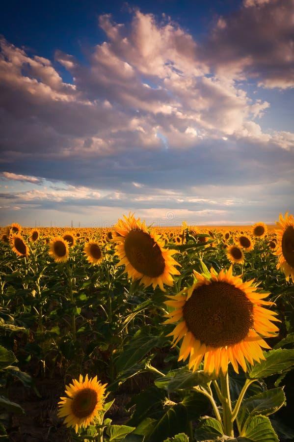 Cores de um céu do verão de agosto foto de stock royalty free