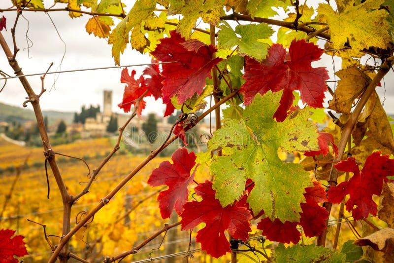 Cores do outono dos vinhedos do Chianti com Badia um Passignano no fundo, entre Siena e Florença Italy imagens de stock royalty free