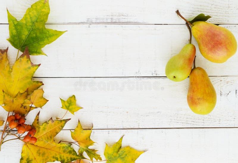 Cores do outono: o amarelo sae, bagas alaranjadas, peras perfumadas, arranjadas em um quadro foto de stock royalty free