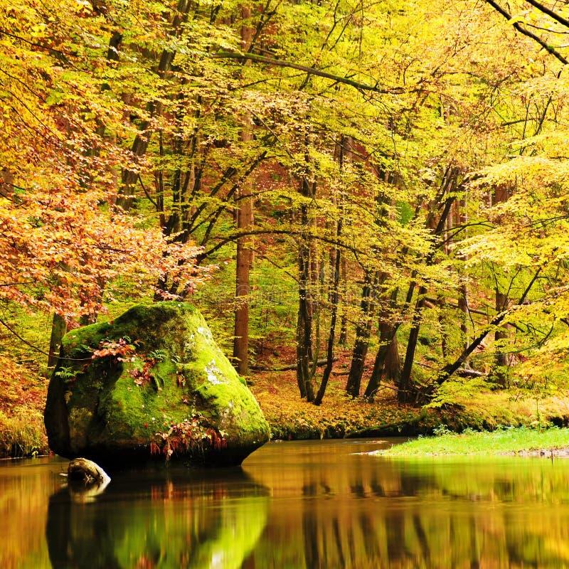 Cores do rio da montanha do outono Os bancos coloridos com folhas, árvores dobraram-se acima do rio Pedregulho grande no rio fotos de stock