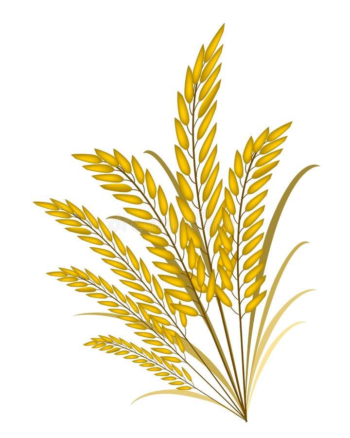 Cores douradas de Jasmine Rice no fundo branco ilustração do vetor