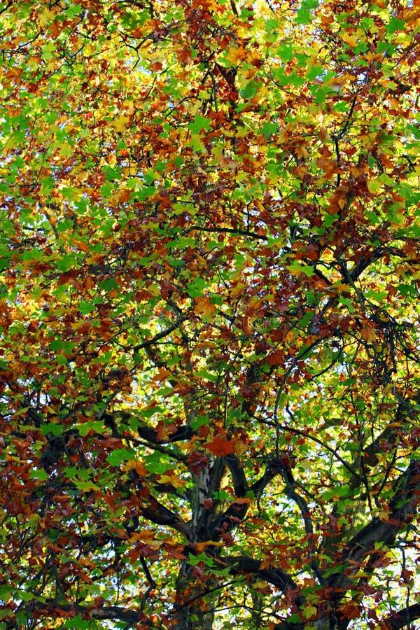 Cores em mudança do outono imagens de stock