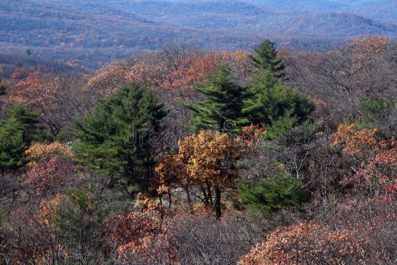 Cores em mudança no outono, um momento antes da chegada do inverno Parque estadual da montanha do urso imagem de stock