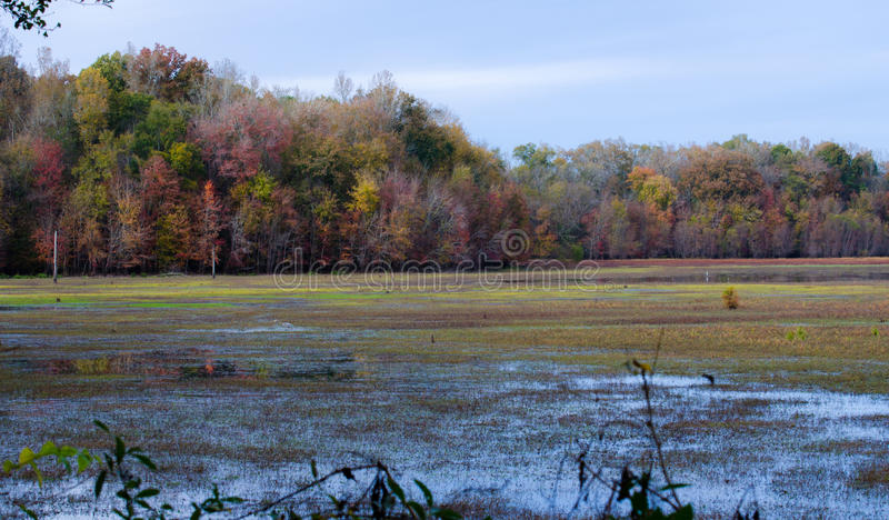 Cores no pântano, área da queda da gestão das aves aquáticas do pasto de Dyar foto de stock royalty free