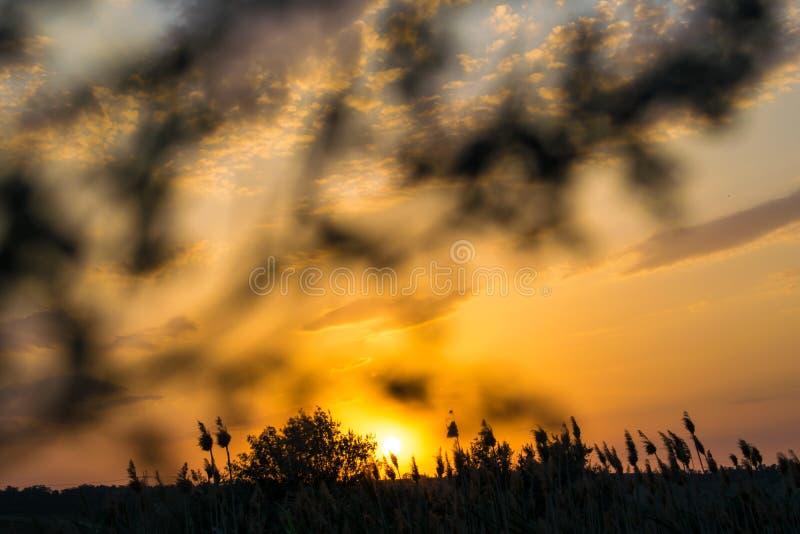 Cores quentes e mornas e máscaras de paisagens bonitas de Rússia na região de Rostov Campos locais de girassóis amarelos de flore foto de stock royalty free