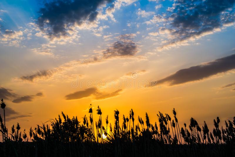 Cores quentes e mornas e máscaras de paisagens bonitas de Rússia na região de Rostov Campos locais de girassóis amarelos de flore foto de stock