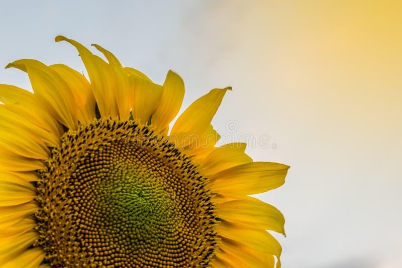 Cores quentes e mornas e máscaras de paisagens bonitas de Rússia na região de Rostov Campos locais de girassóis amarelos de flore fotografia de stock royalty free