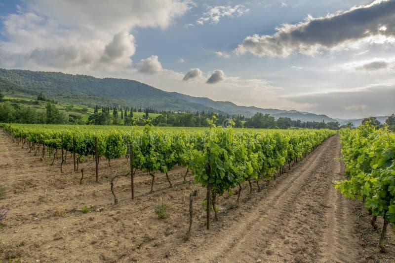 Cores vívidas dos vinhedos no por do sol, França, imagens de stock