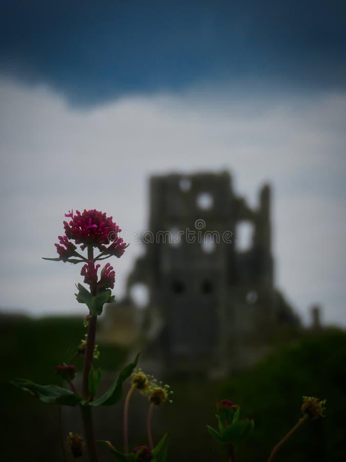 Corfe slott på lynnig dag royaltyfria bilder