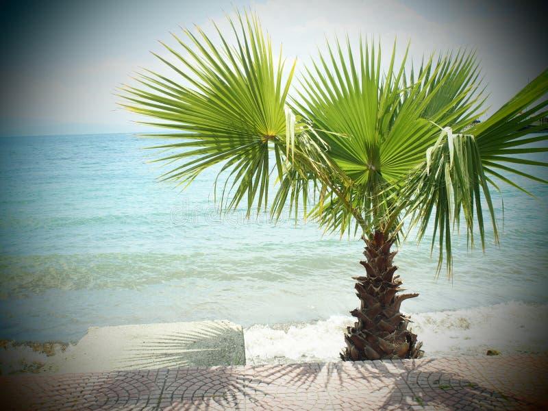 Corfu, Grecja plaża i drzewko palmowe, zdjęcia stock