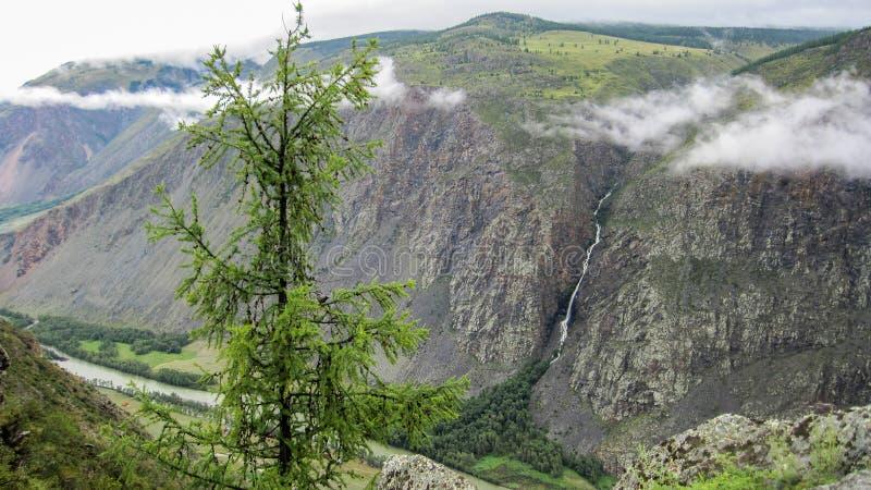 Corge nas montanhas de Altai que fluem abaixo de um rio de montanha em um dia de verão imagem de stock