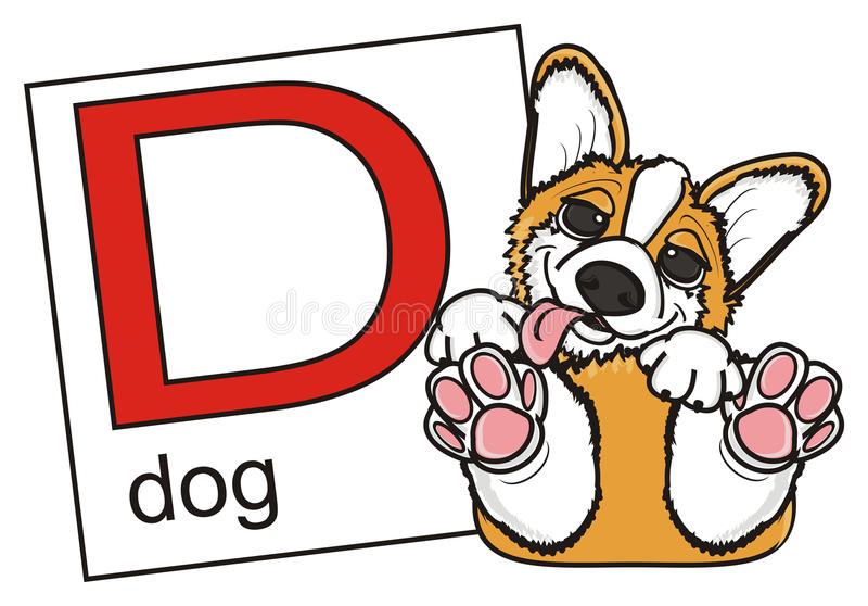 Corgi and a card with the letter D. Puppy Pembroke Welsh Corgi lying on his back and a card with the letter D royalty free illustration