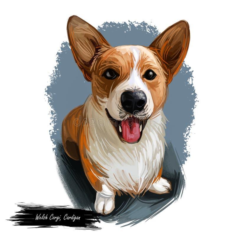 Corgi di Lingua gallese, ritratto della razza del cane del cardigan isolato su bianco Illustrazione di arte di Digital, disegno a illustrazione di stock