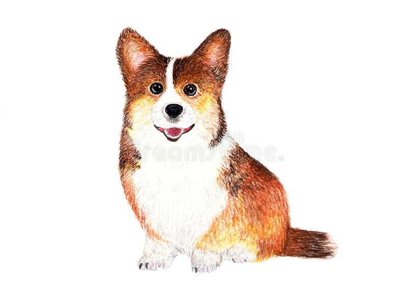 Corgi Pembroke Terrier de Gallois Illustration d'aquarelle illustration stock
