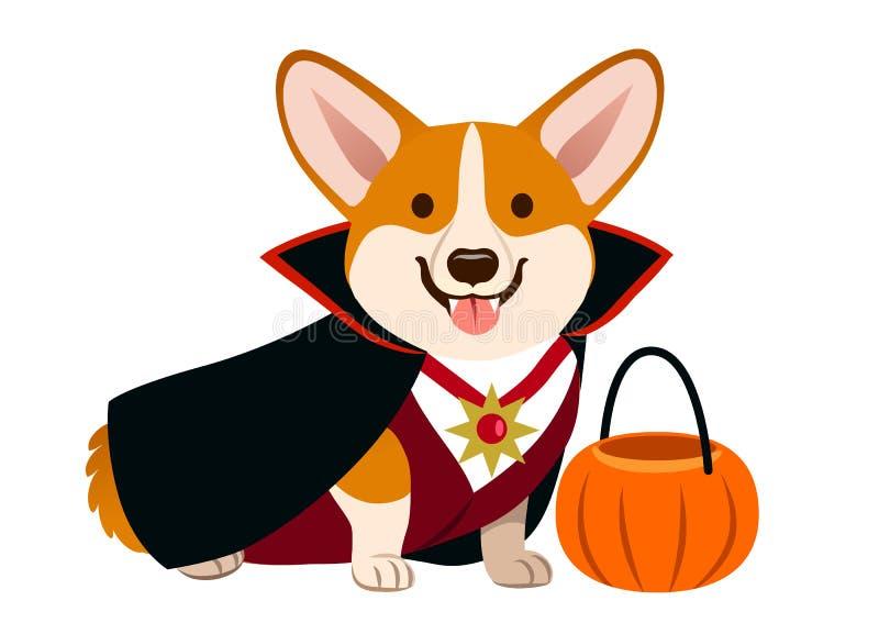 Corgi wampira psi jest ubranym Halloweenowy kostium z czarnym przylądkiem, fan royalty ilustracja