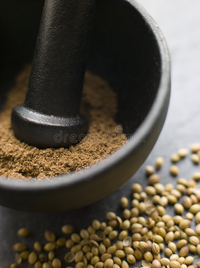 Coriander Powder in a Pestle and Mortar with Coria. Close up of Coriander Powder in a Pestle and Mortar with Coriander Seeds royalty free stock photo